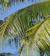 Palm Sunday Feast Day